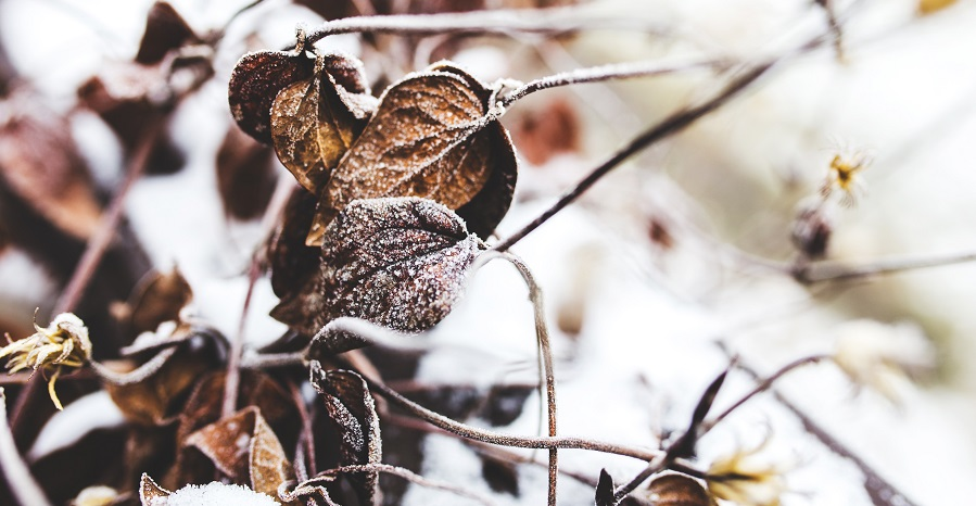 Winter-Proof Yourself - DISABILITY INSURANCE